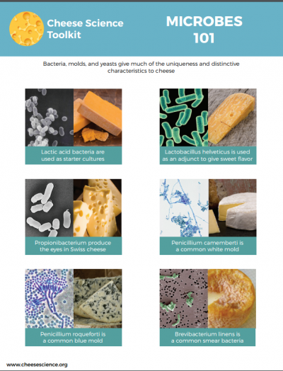 Voor de fermentatiefreaks: cheesescience 101
