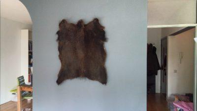 Wild zwijn huid aan de muur
