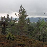 De prachtige Zweedse natuur om in te wildplukken)